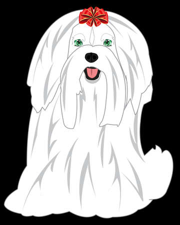 Dog of the small sort lapdog drawing