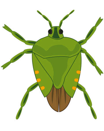 Insect bedbug on white background is insulated Vector Illustration