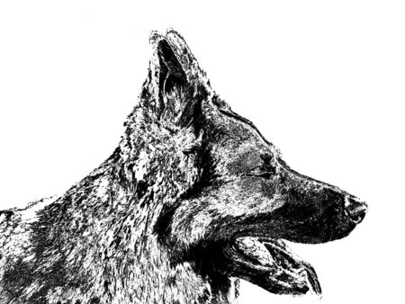 alsatian: Black silhouette of a Alsatian dog with protruding tongue on white background