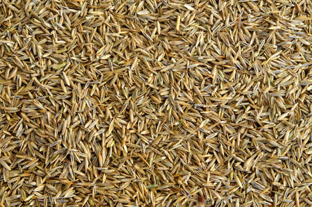 Macro detail of grass seed background photo