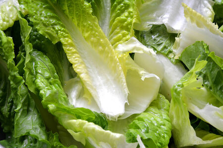 Green fresh salad leaves detail