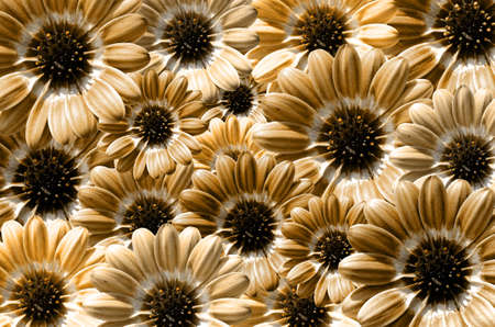 to bloom: Yellow illustration of background created from daisy flower bloom Stock Photo