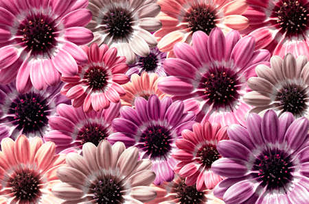bloom: Violet illustration of background created from daisy flower bloom