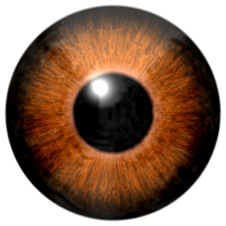 アイの茶色の着色されたアイリス、金の静脈と黒い瞳の詳細