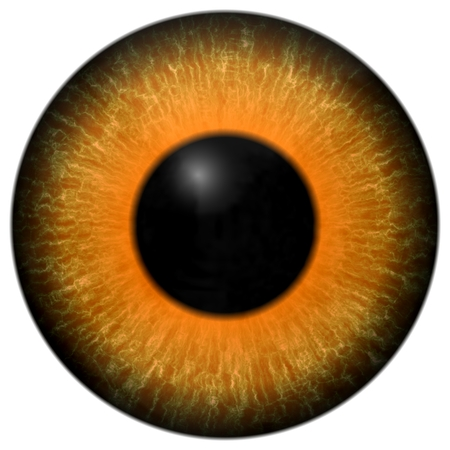 capillaries: Detail of eye with orange colored iris, veins and black pupil Stock Photo
