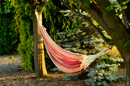 field stripped: Hammock in summer garden with trees at sunset