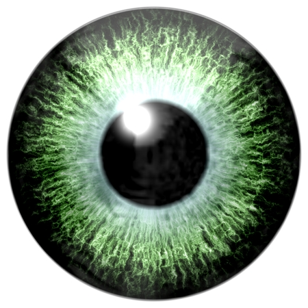 pupil: Detail of eye with light green colored iris, veins and black pupil with glow