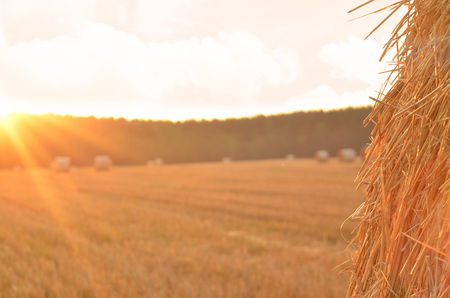 farm field: Detail of straw bale in foreground at sunset Stock Photo