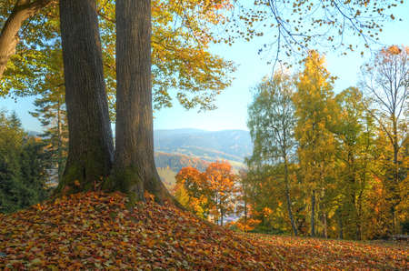 hdr background: Two trees in foreground and trees with orange and yellow leaves in background in spa of Jesenik city HDR