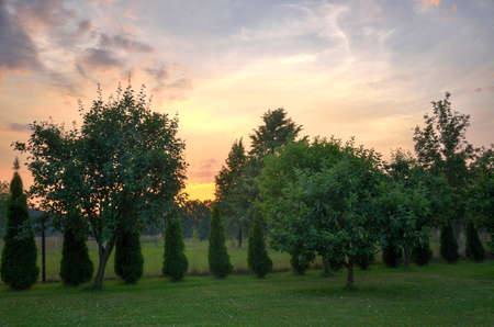 hdr: HDR sunset in the garden with trees Stock Photo