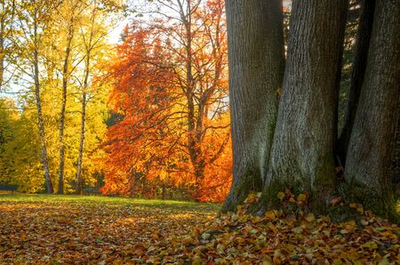 hdr background: Three trees in foreground and trees with orange and yellow leaves in background HDR