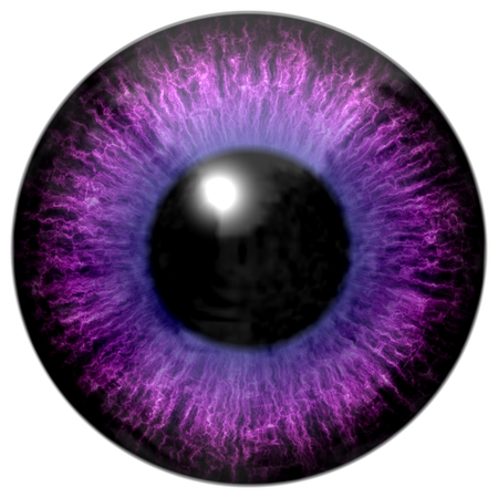 capillaries: Detail of eye with pink, purple colored iris, white veins and black pupil