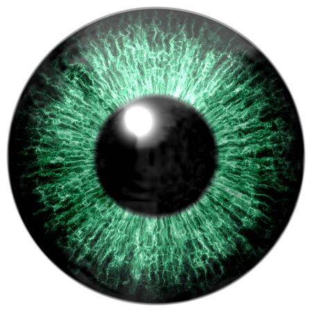 capillaries: Detail of eye with green colored iris, veins and black pupil