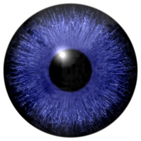 capillaries: Detail of eye with blue colored iris, white veins and black pupil