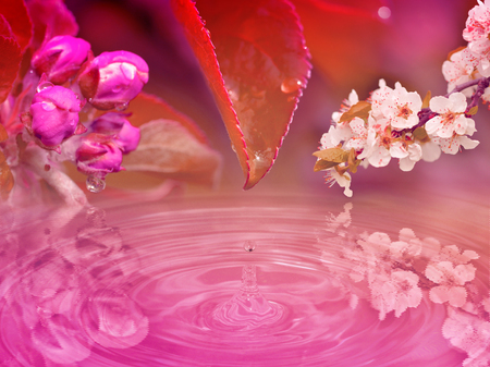 Impact of drop trickling from the leaf and apple and cherry branches. Red, pink stylized wallpaper background. Stock Photo