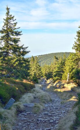 Rocky path leading to the mountains surrounded by mature conifers. HDR photo.