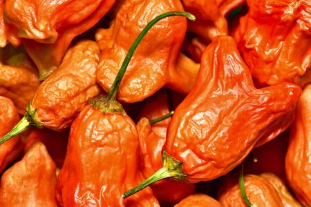 Capsicum Baccatum Chilli also known as Christmas bell texture