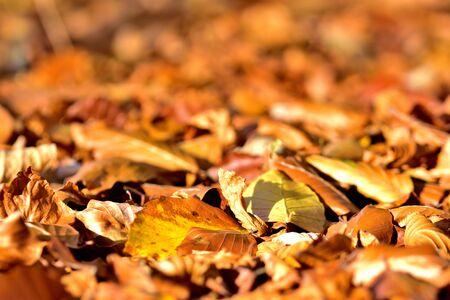 Background of golden autumn fallen leaves on ground.