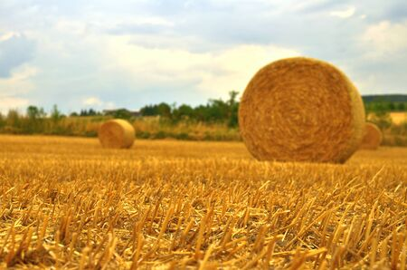 Straw bales in summer on the field