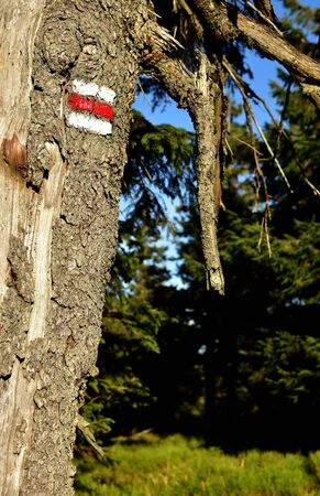 A tree with a typical Czech tourist sign. Vertical photo. Imagens