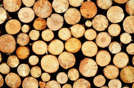 Abstract of a pile of natural wooden logs background. 免版税图像