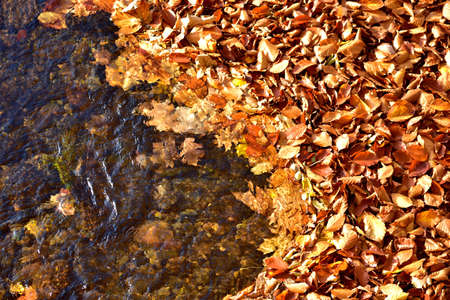 Autumn fallen leaves in the river background.