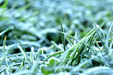 Autumn natural green grass background with hoarfrost. Фото со стока