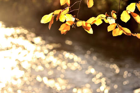 Autumn scene of leaves and glittering river 免版税图像