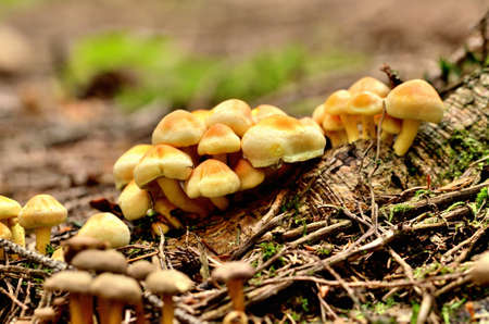 Group of mushrooms in forest. Close-up detail.