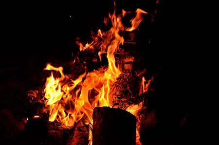 Flames of natural fire in nature while camping 免版税图像