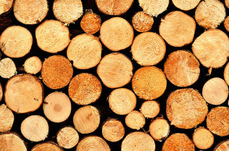 Pile of wooden logs ready for winter texture.