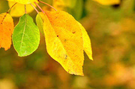 Autumn background of leaves. Close-up detail.