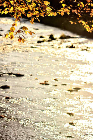 Autumn scene of leaves and glittering river. Vertical photo.