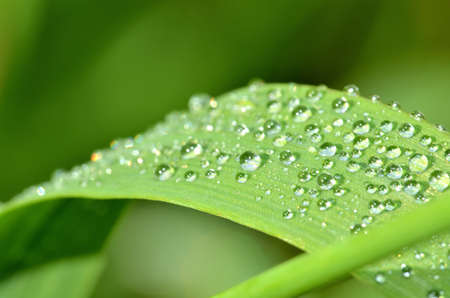 Close-up of dew drops on a blade of spring grass. Low depth of field. 免版税图像