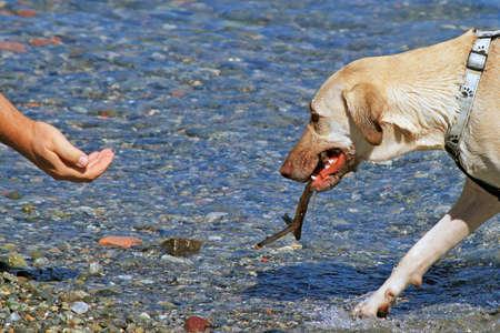 obedient: dog obedient