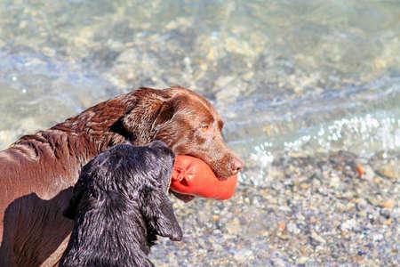 Dogs attitude photo
