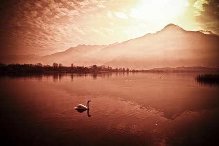 Swan & Sunset photo