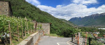 pizzoccheri: Valtellina  Italy