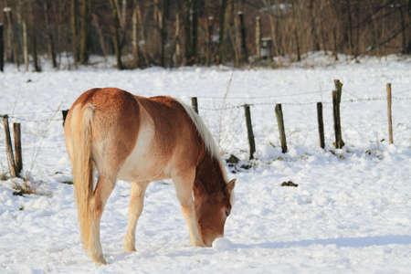 horses Stock Photo - 12474196