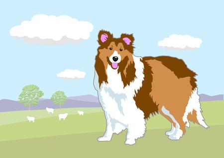 sheep dog: Sheep Dog