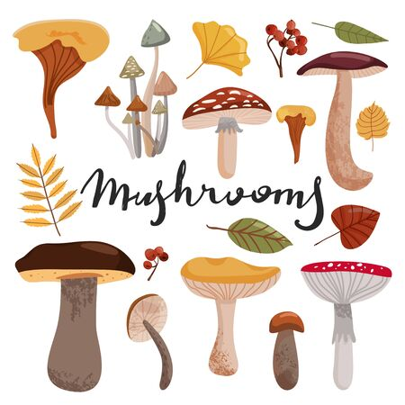 Autumn time composition. Set of various types of mushrooms and autumn leaves. Vector illustration on white background.