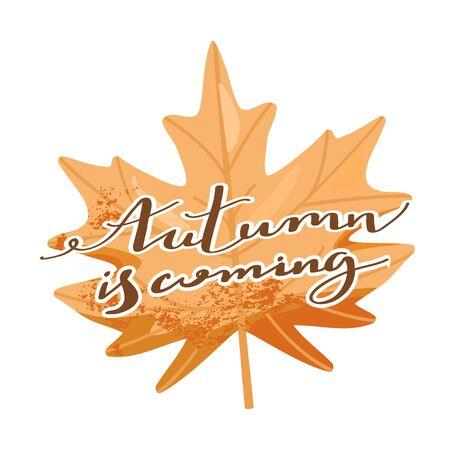 Autumn illustration. Stylish typography slogan design Autumn is coming sign. Maple Leaf. Vector illustration on white background.