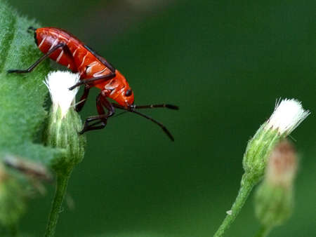 Insects photo