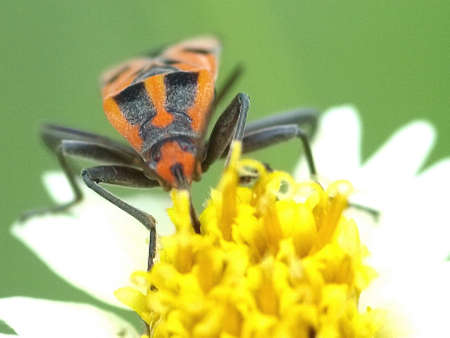 Insects perched on a flower photo