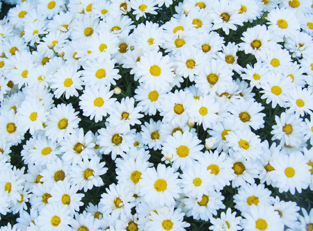 Abstract background of flowers. Close-up. Stock Photo