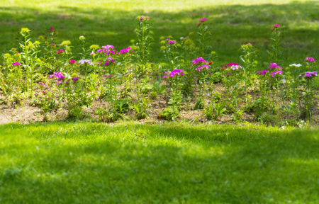Flowers in park, spring Stock Photo