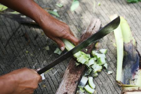 kitchen scraps: Vegetables for organic fertilizer, bio gardening