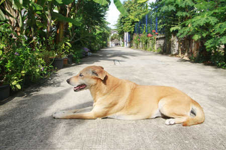 tried: Thai dog look so hot and tried Stock Photo