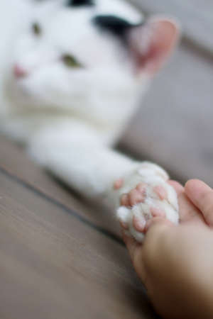 lend: cats paw in a mans palm. human to lend a helping hand. focus on a edge of cats paw Stock Photo