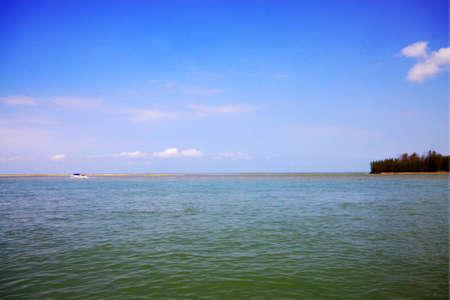 swamp: Swamp lake in summer